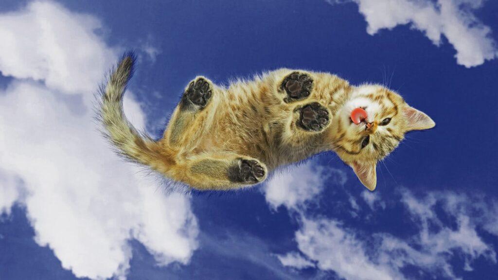 un chaton trop mignon lèche une vitre invisible