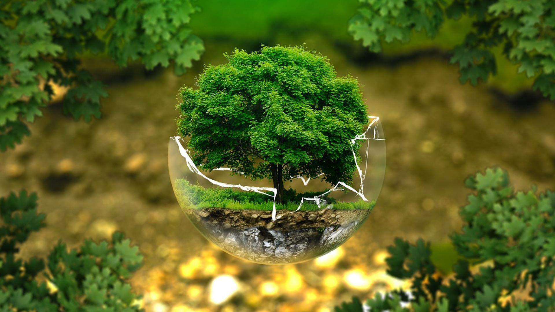 Les arbres sont les spécialistes de l'environnement