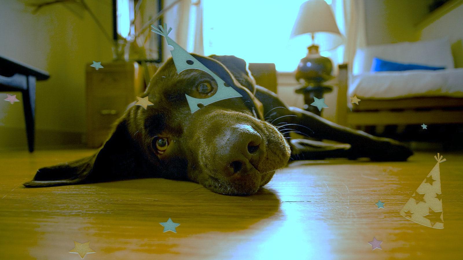 après la fête de noel, c'est le repos pour les chiens